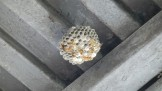 軒下の蜂の巣