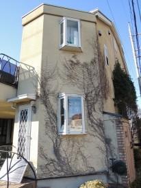 塗装面の植物の根
