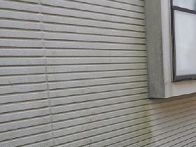 外壁の藻やカビ
