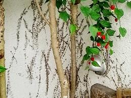 跡植物の跡